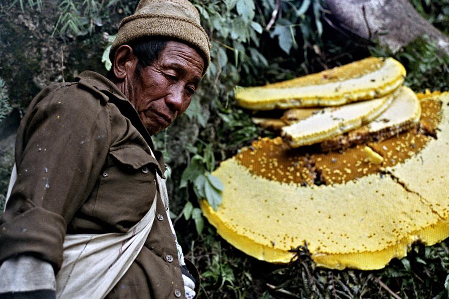 nepalese-honey-hunters-12