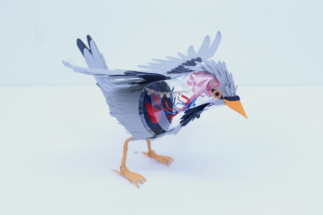 paper-birds-diana-beltran-herrera-07