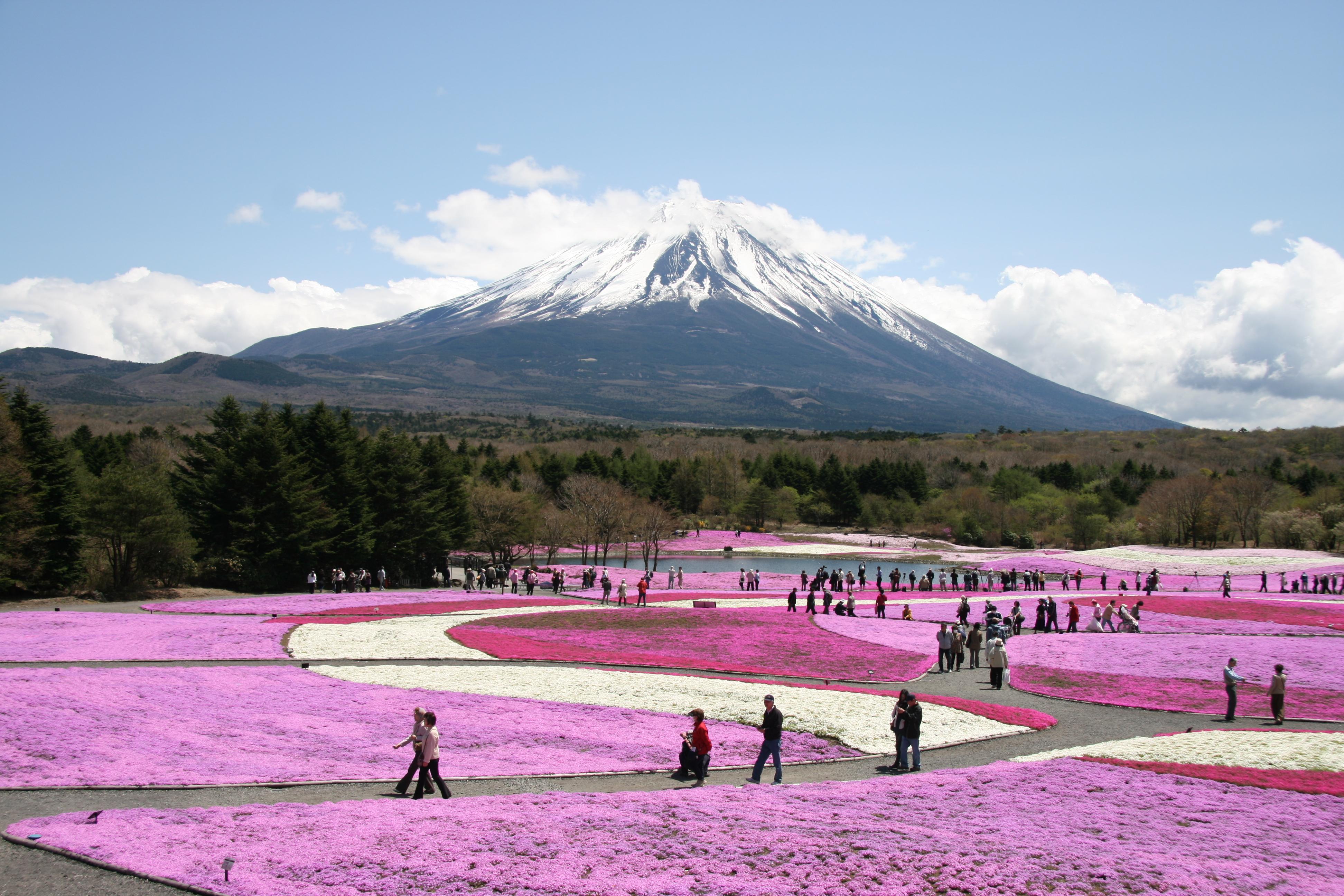 shibazakura-flower-festival-09