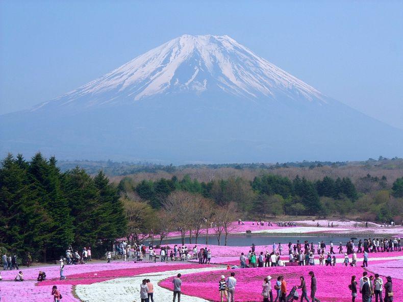 shibazakura-flower-festival-19