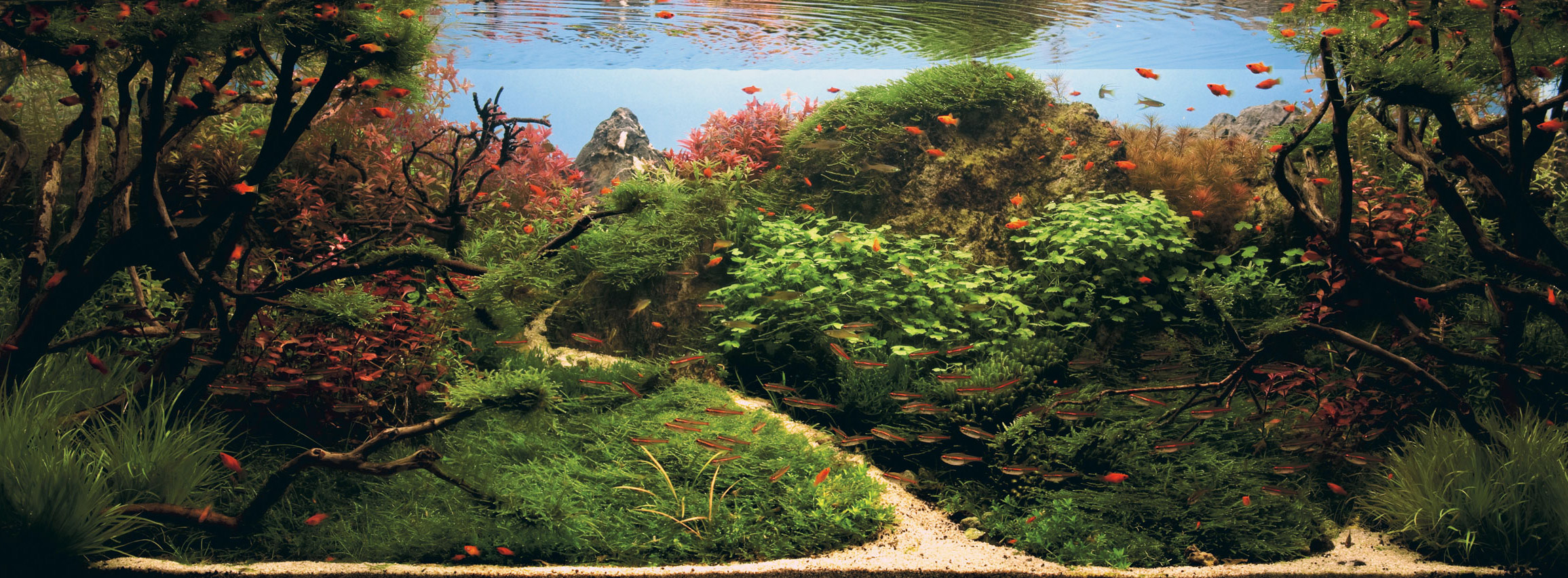 aquascaping-01