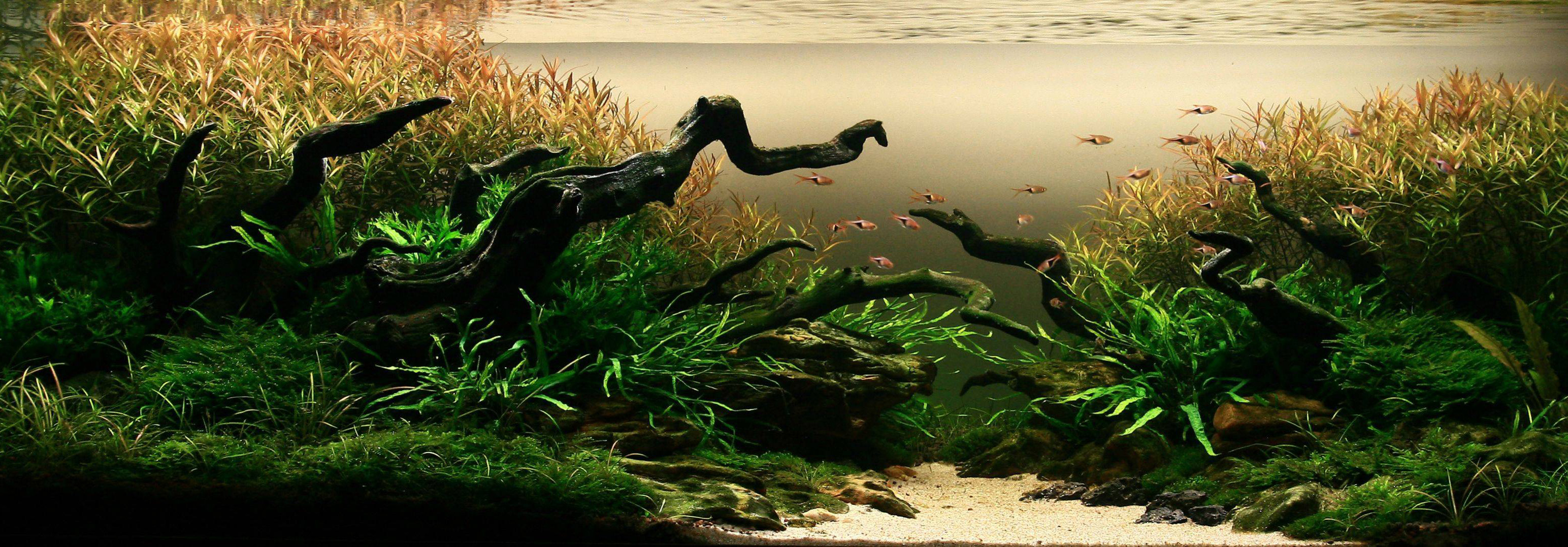 aquascaping-02