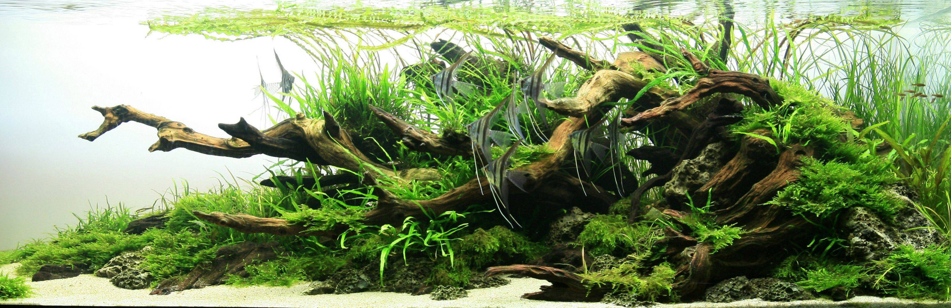 aquascaping-03