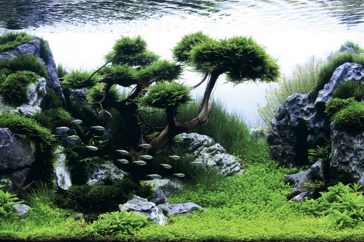 Beautifully Designed Aquariums Compete In The International Aquatic Plants Layout Contest Lost