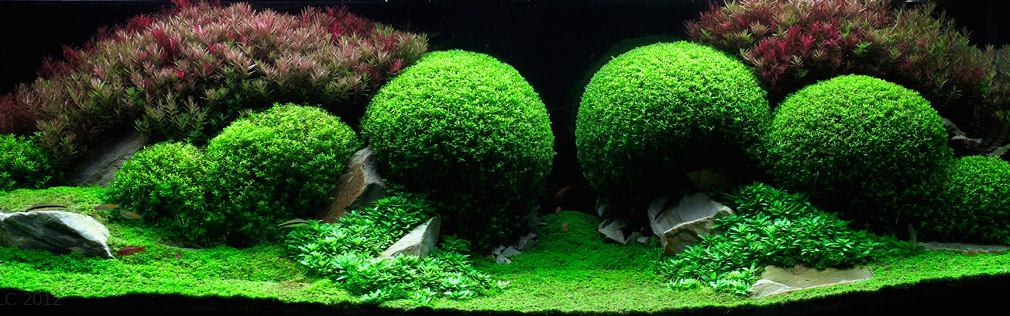 aquascaping-18