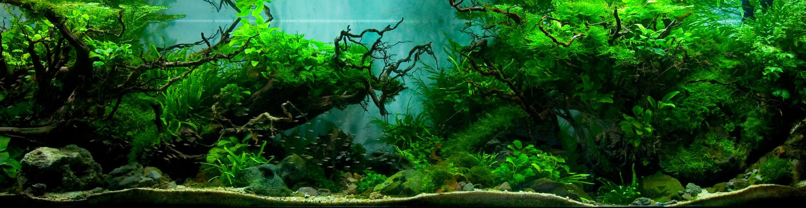 aquascaping-20