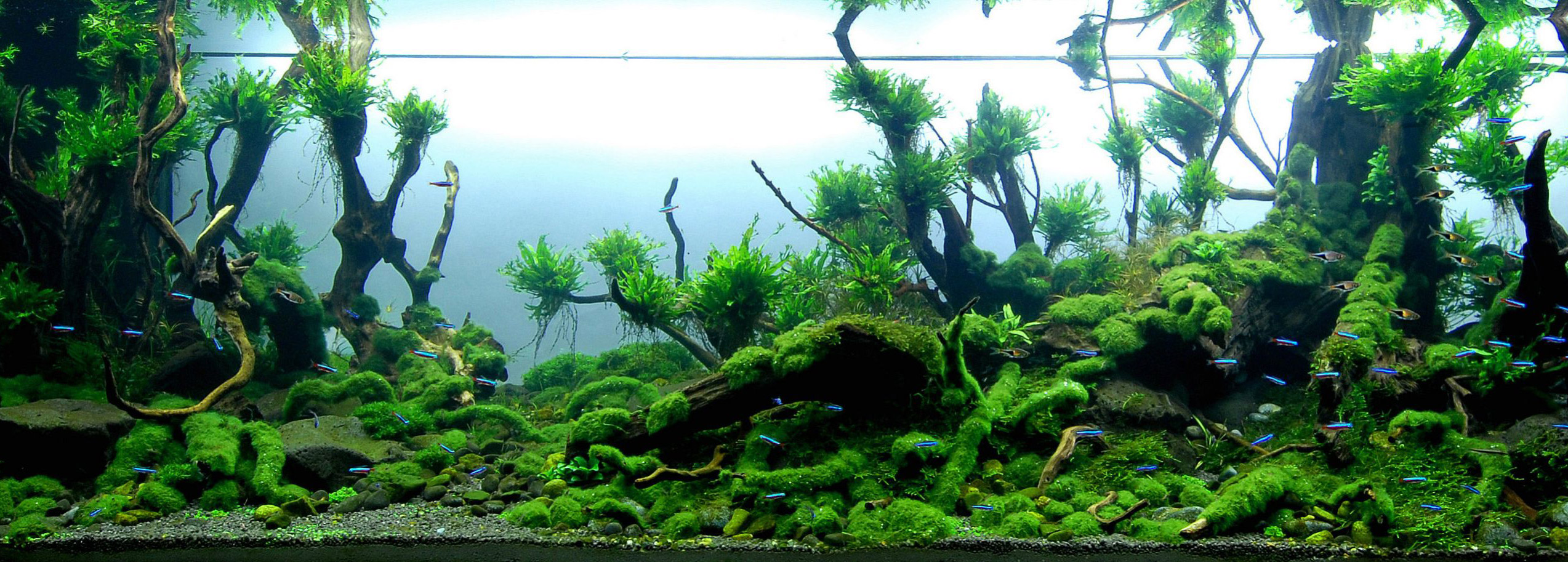 aquascaping-21