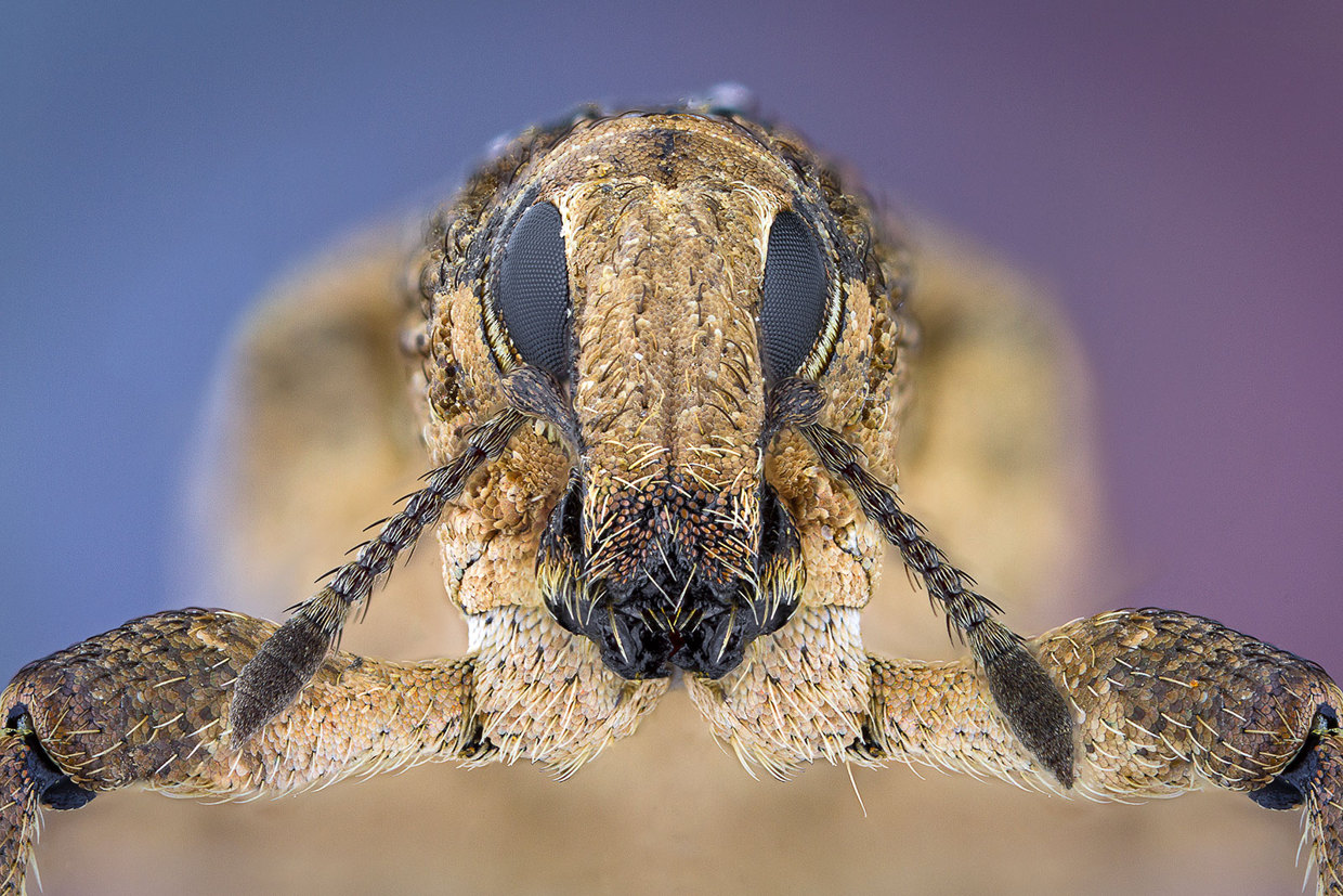 insect-macro-photography-paulo-lataes-09