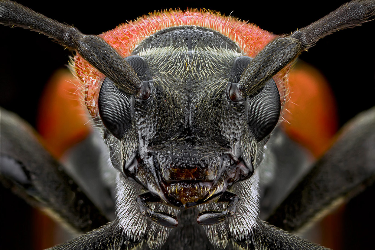 insect-macro-photography-paulo-lataes-11