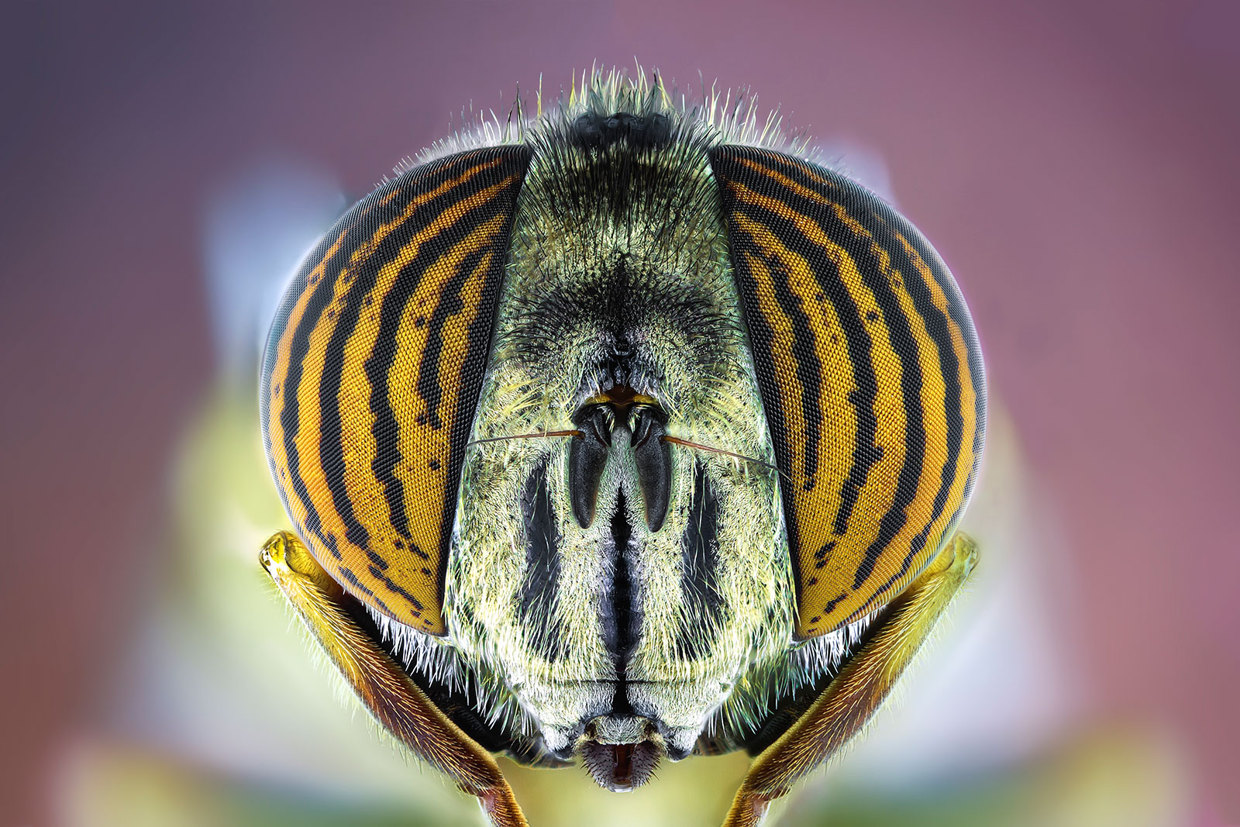insect-macro-photography-paulo-lataes-13