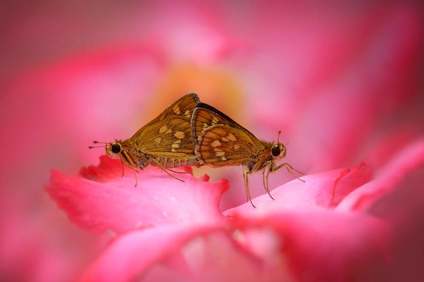 garden-insects-nordin-seruyan-04