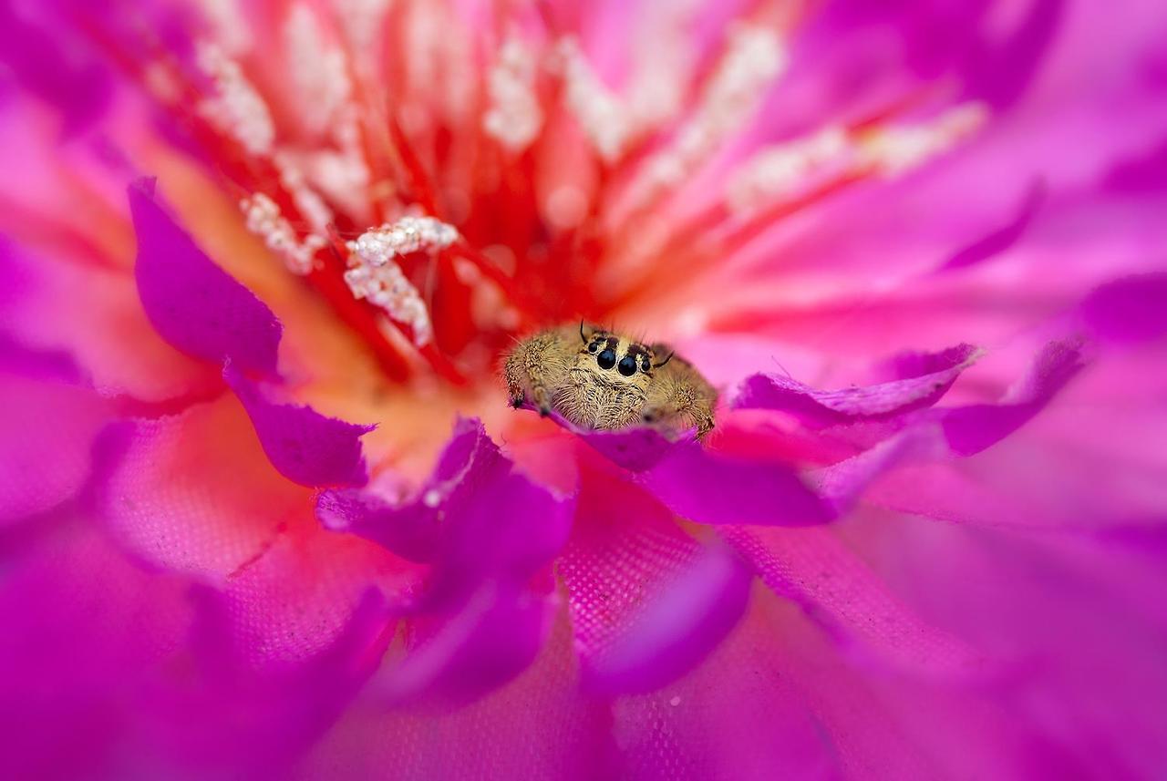garden-insects-nordin-seruyan-05