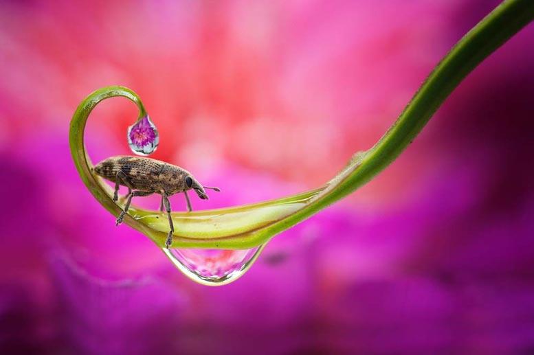garden-insects-nordin-seruyan-07