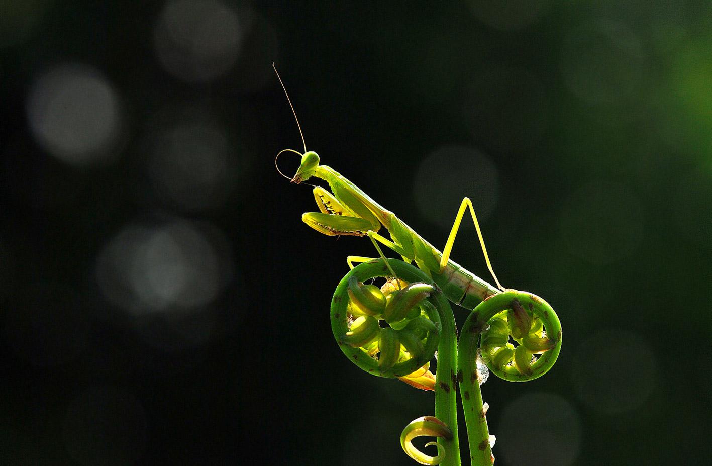 garden-insects-nordin-seruyan-10