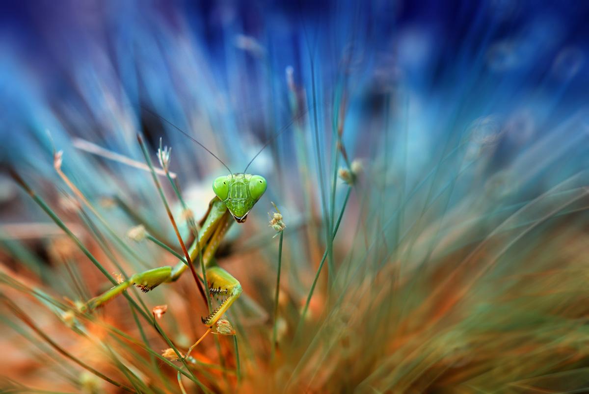 garden-insects-nordin-seruyan-11