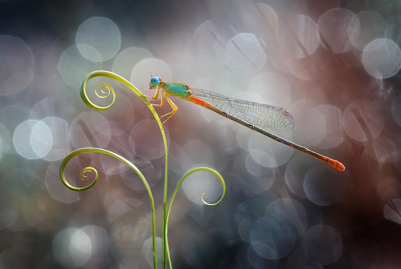 garden-insects-nordin-seruyan-14