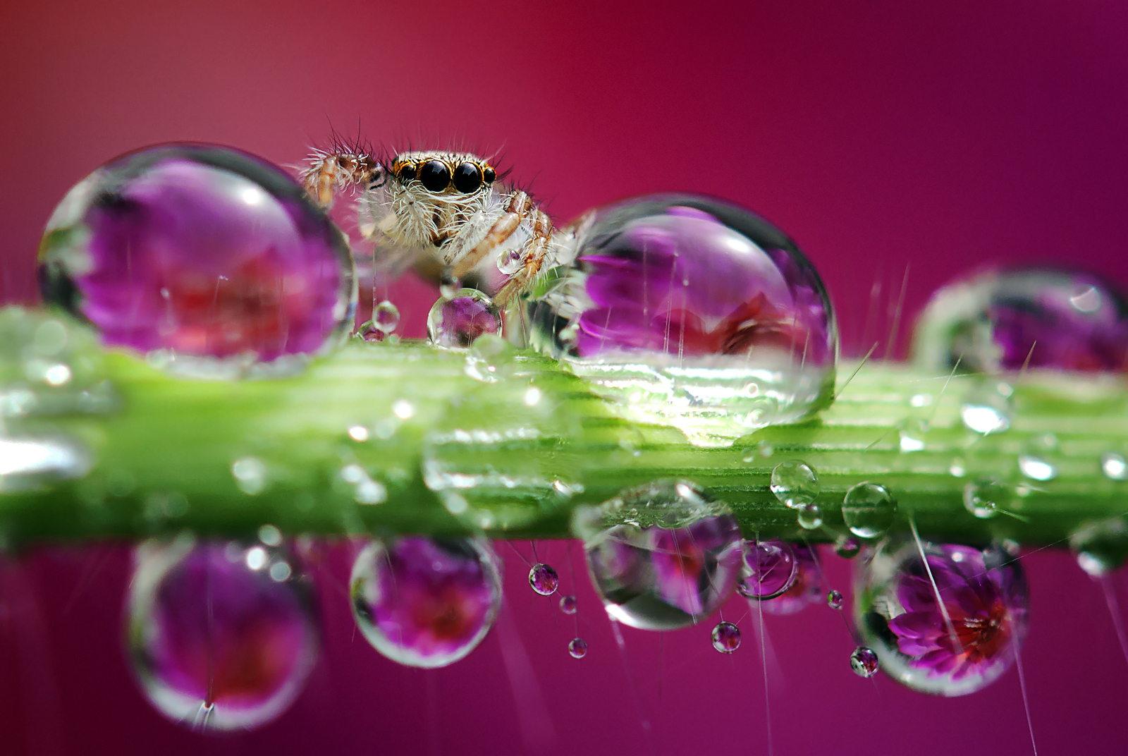 garden-insects-nordin-seruyan-20