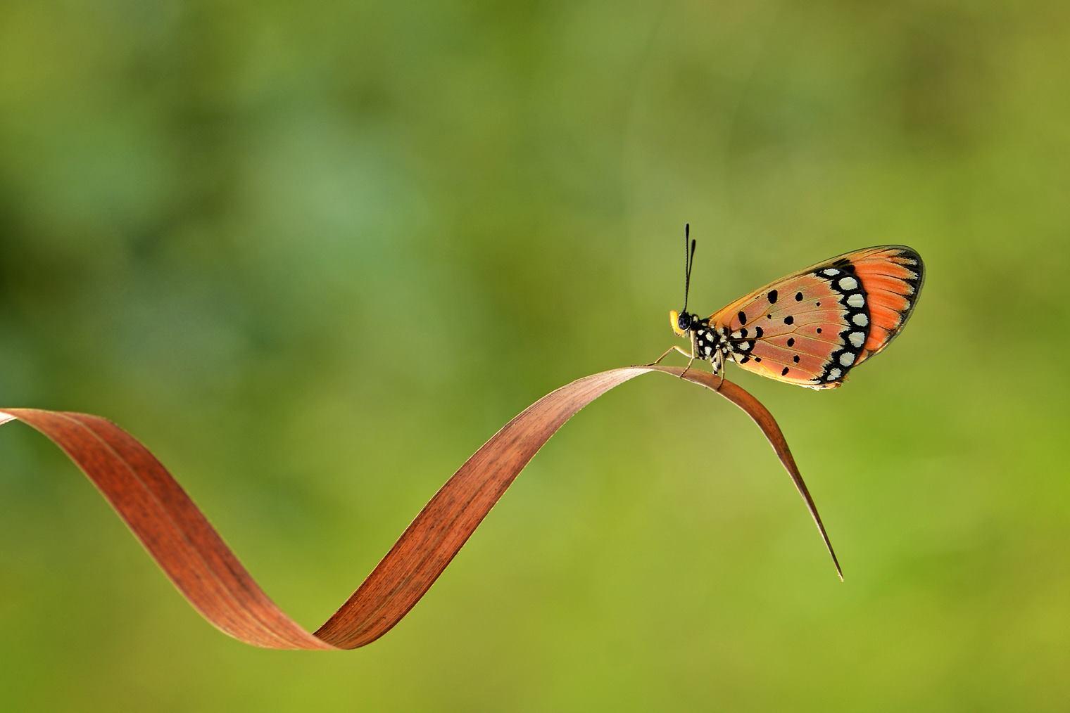 garden-insects-nordin-seruyan-21