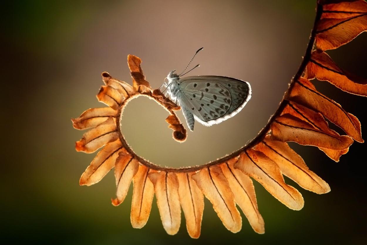 garden-insects-nordin-seruyan-22