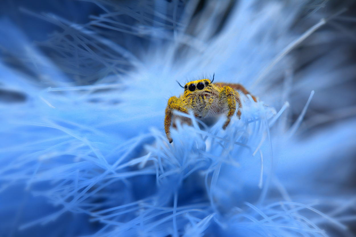 garden-insects-nordin-seruyan-23