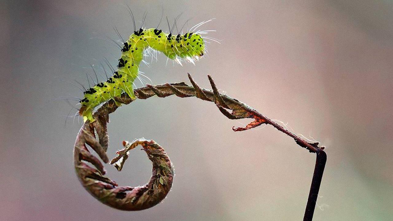 garden-insects-nordin-seruyan-24