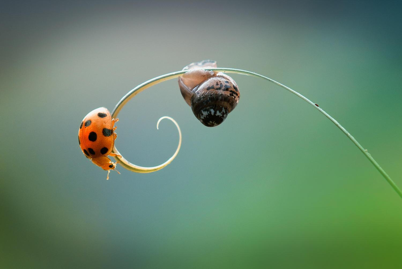 garden-insects-nordin-seruyan-25