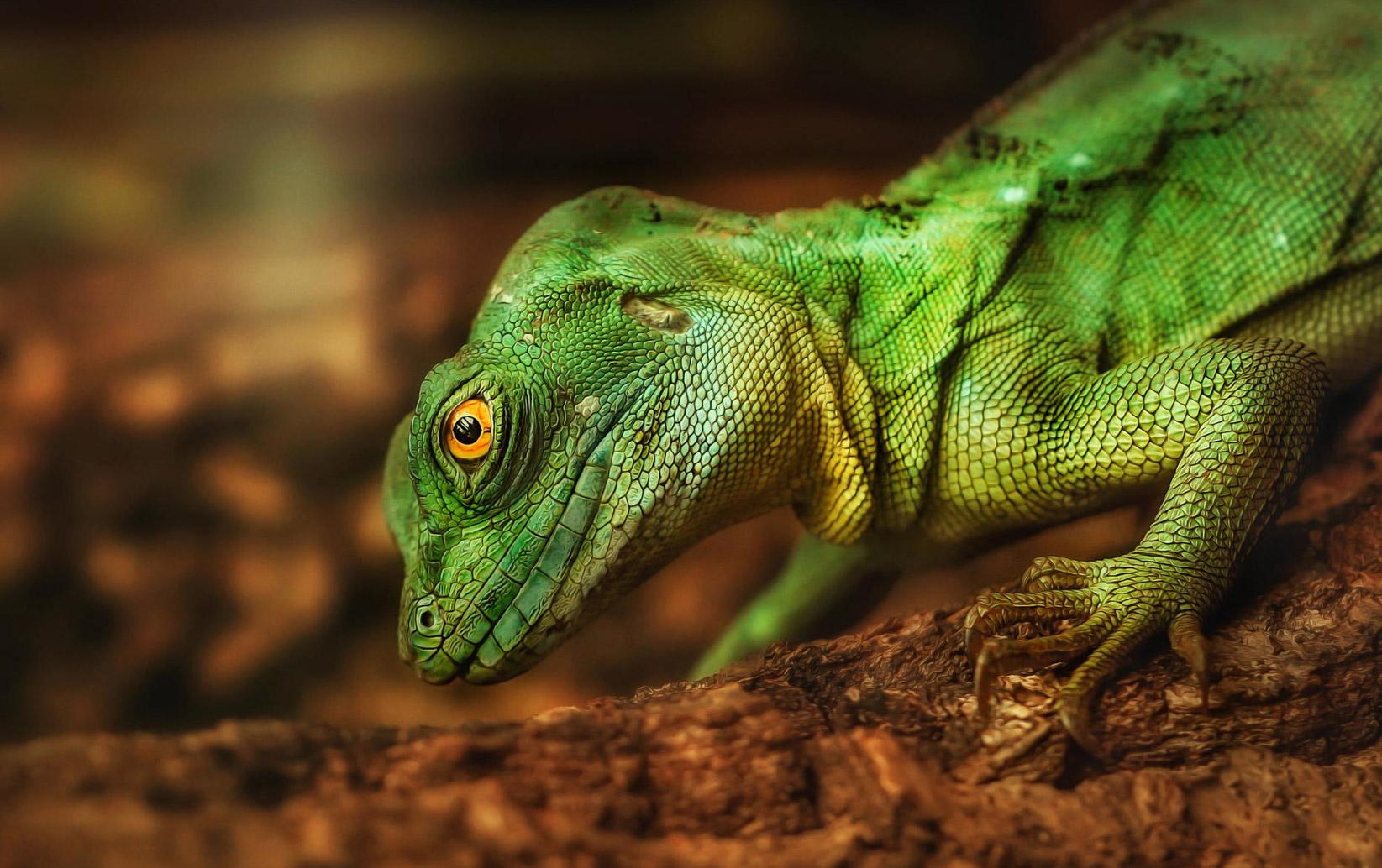 reptiles-amphibians-detlef-knapp-01
