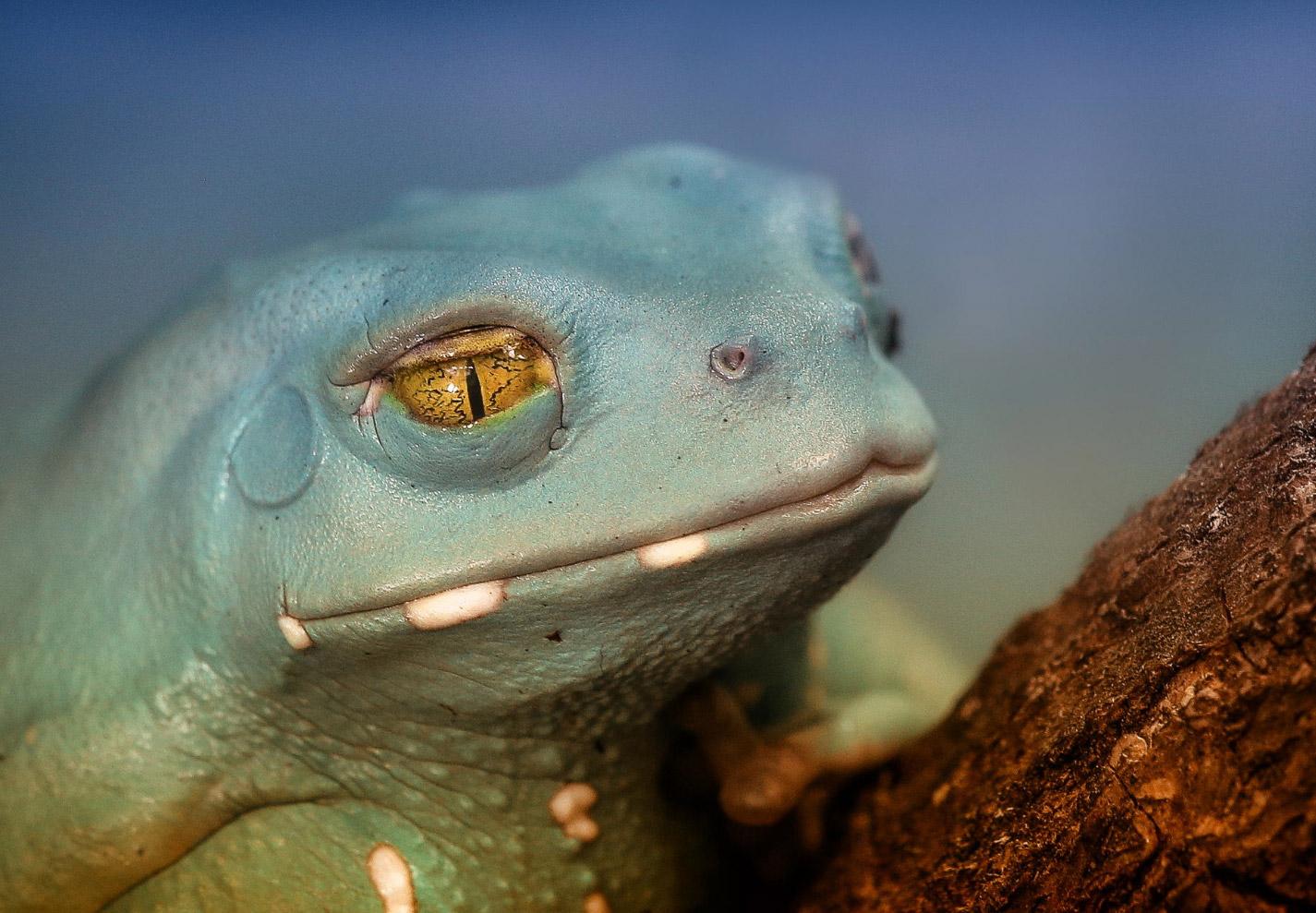 reptiles-amphibians-detlef-knapp-02