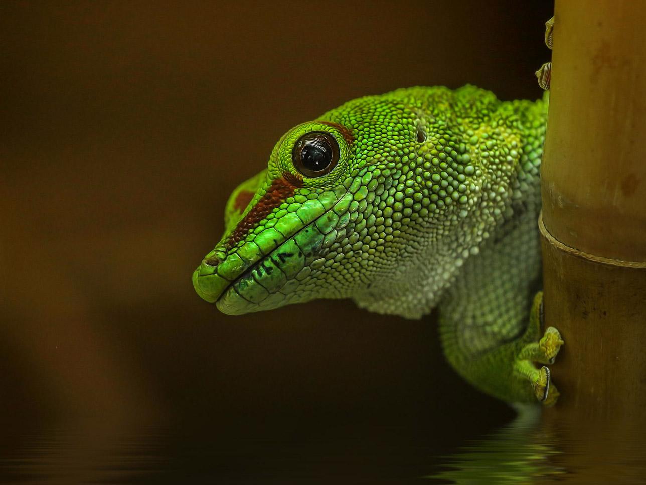 reptiles-amphibians-detlef-knapp-04