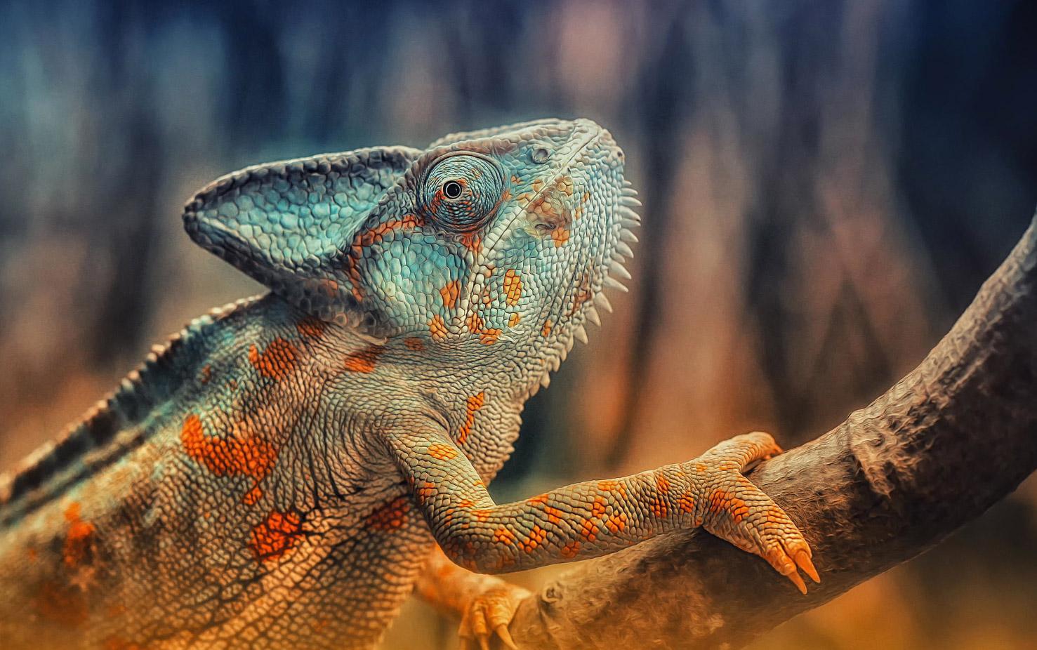 reptiles-amphibians-detlef-knapp-05