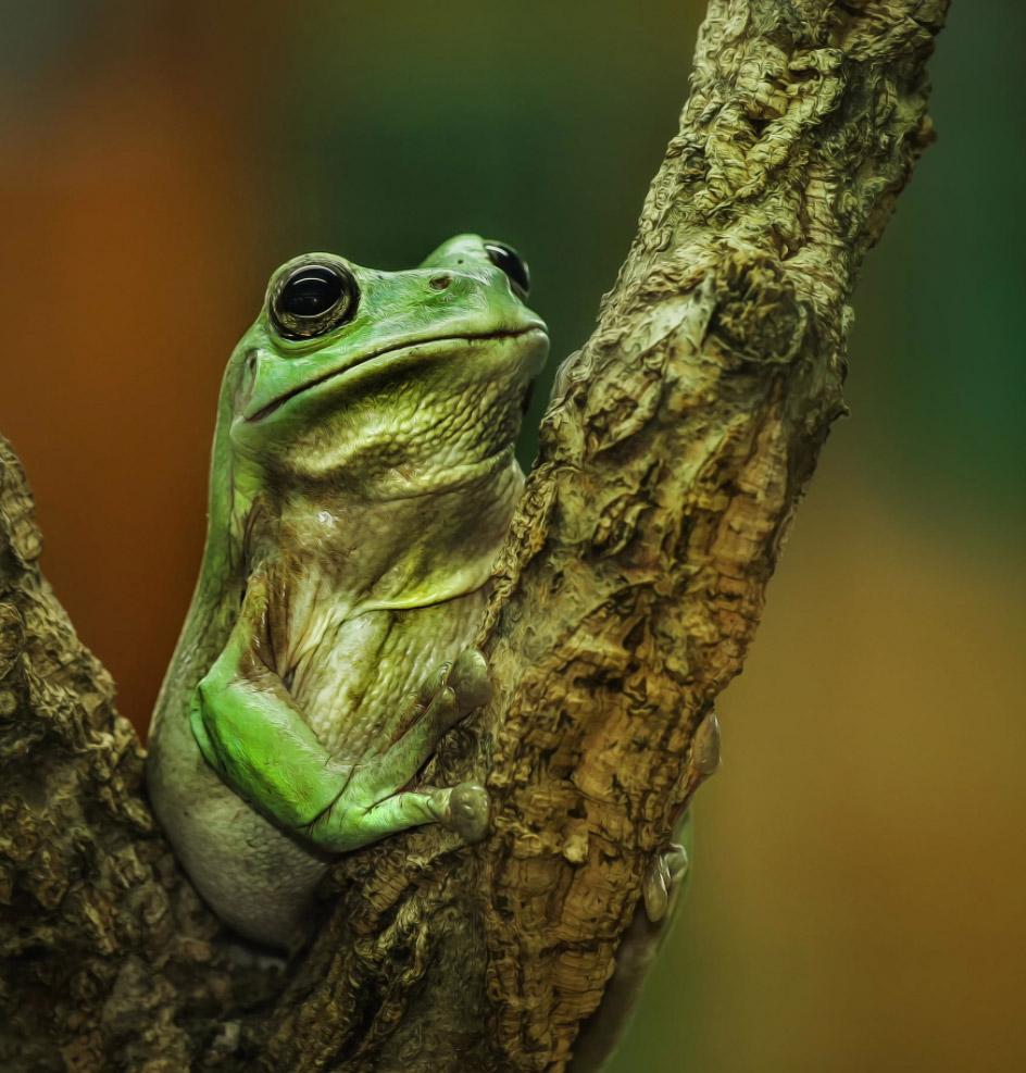 reptiles-amphibians-detlef-knapp-06