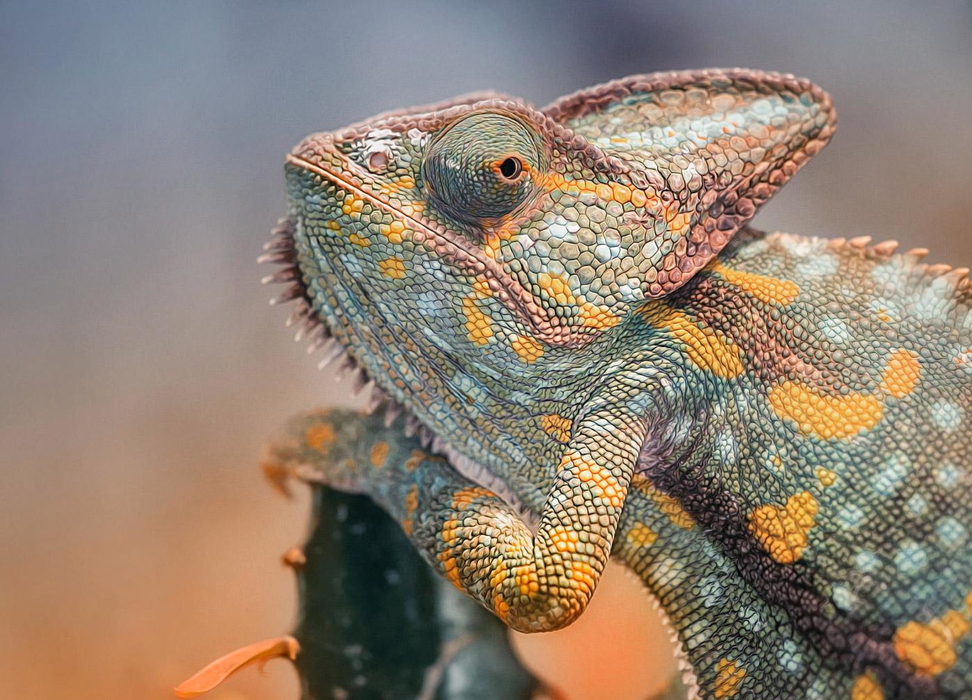reptiles-amphibians-detlef-knapp-07