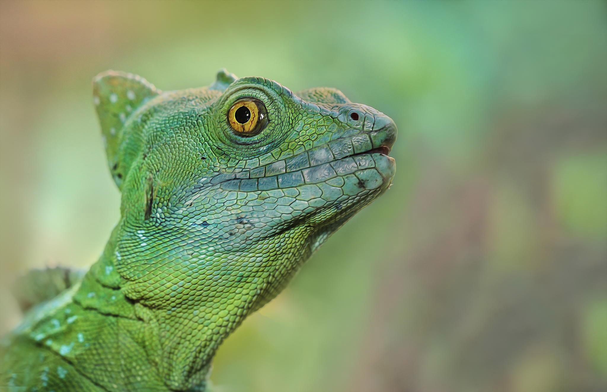 reptiles-amphibians-detlef-knapp-09