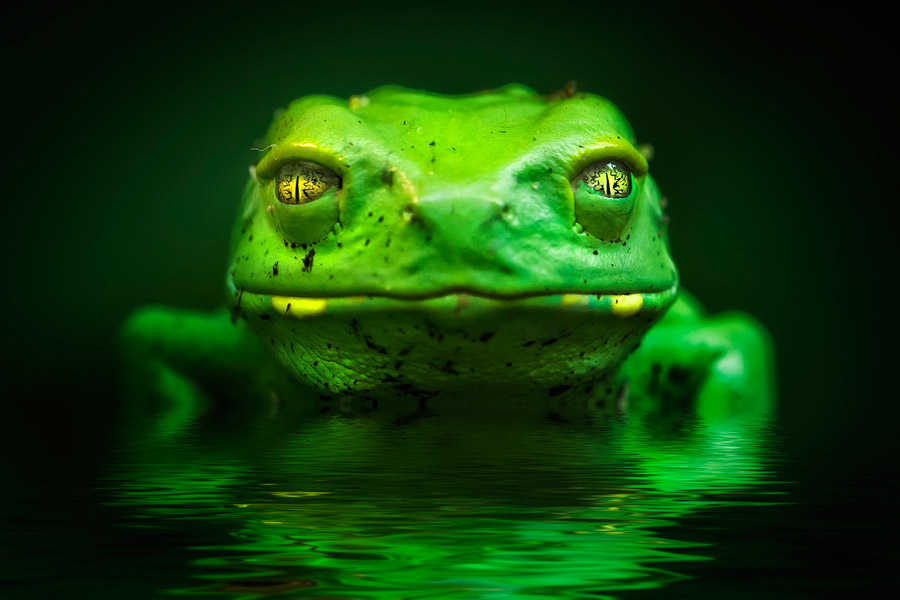 reptiles-amphibians-detlef-knapp-11