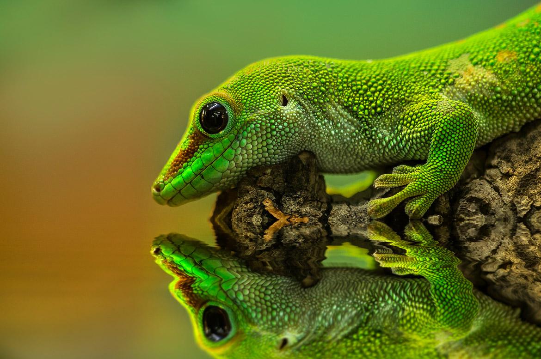 reptiles-amphibians-detlef-knapp-12