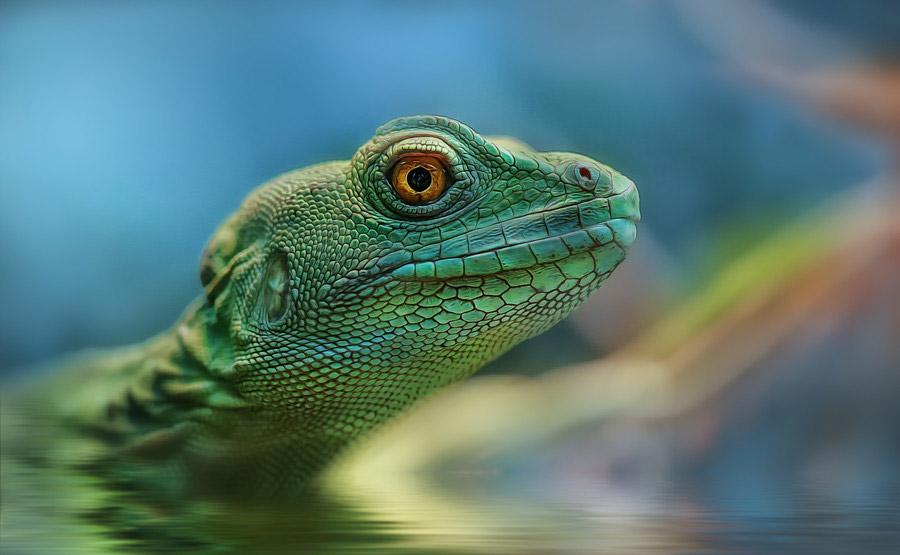 reptiles-amphibians-detlef-knapp-13