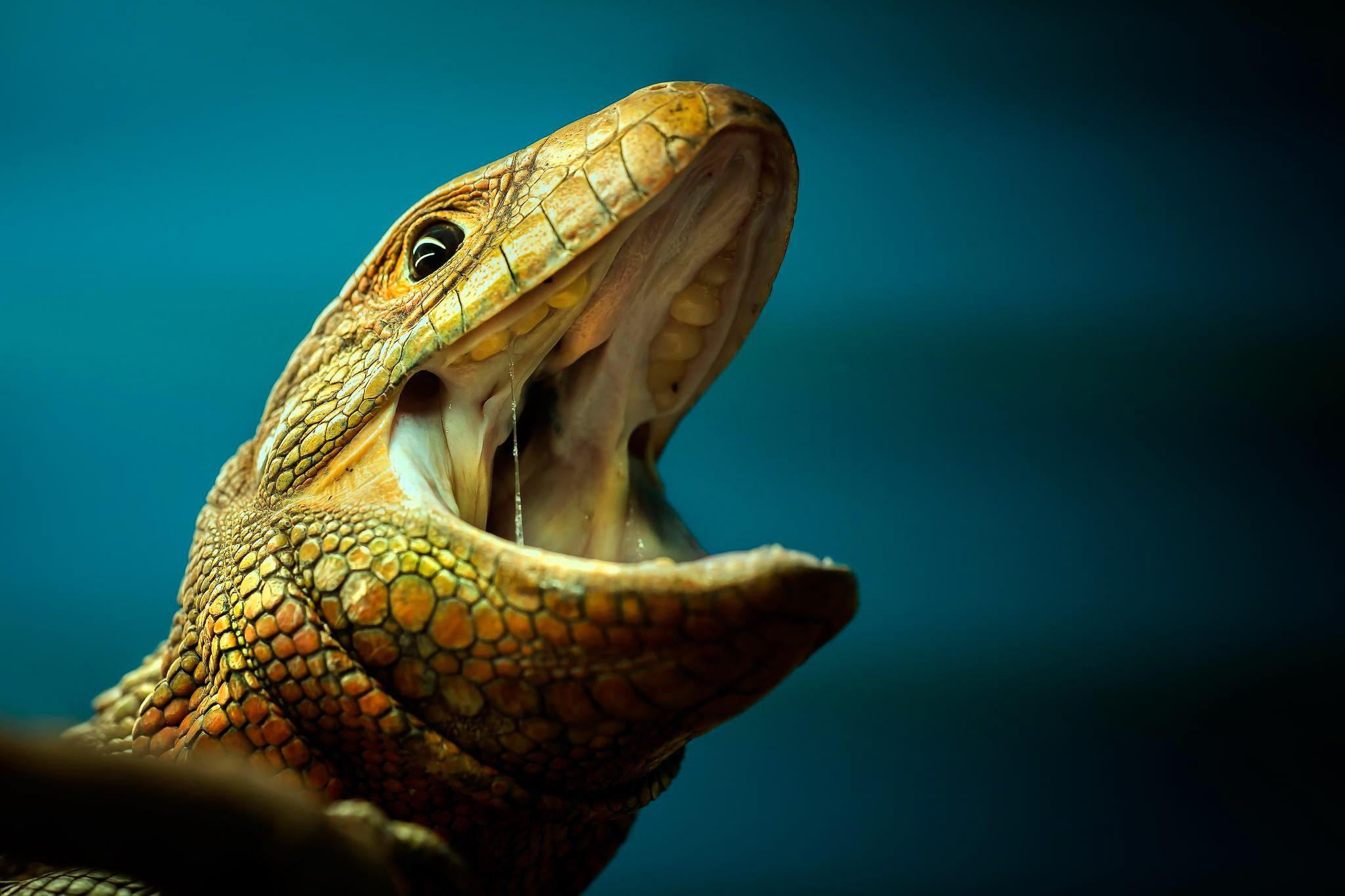 reptiles-amphibians-detlef-knapp-14