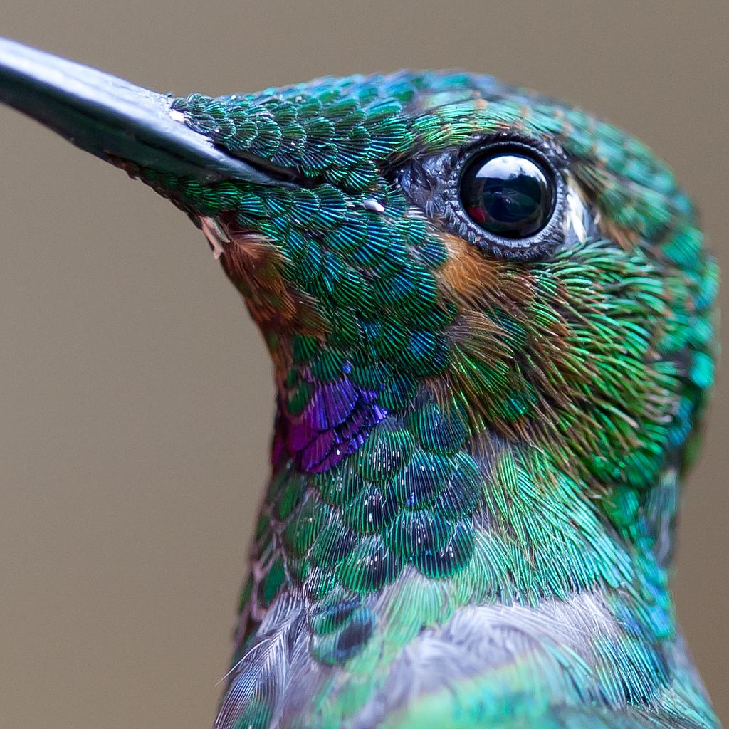hummingbirds-chris-morgan-02