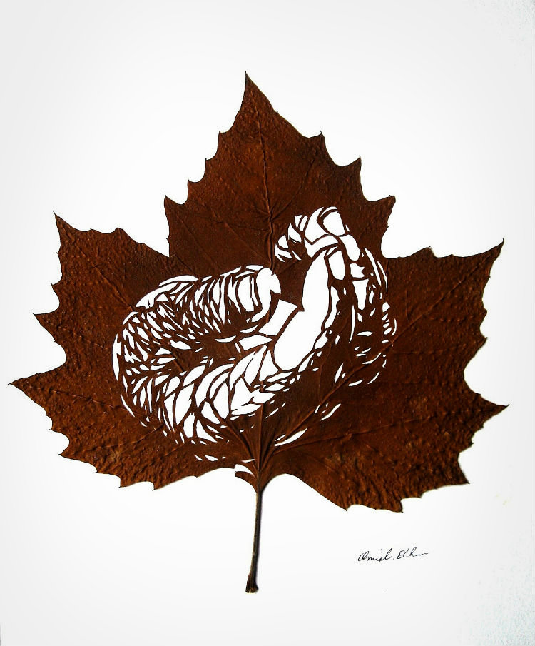 omid-asadi-leaf-art-01