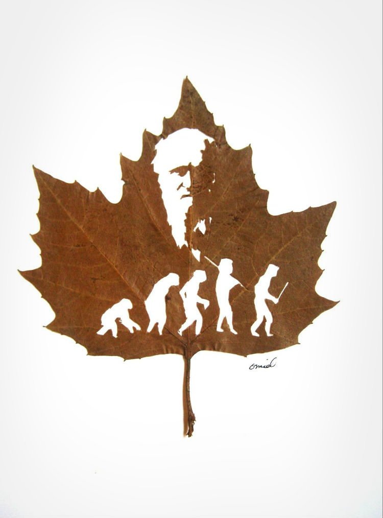 omid-asadi-leaf-art-03