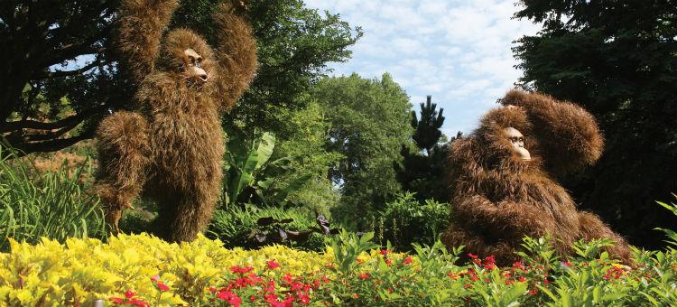 orangutans-Atlanta_Botanical_Garden
