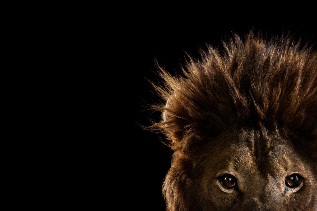 animals-brad-wilson-02