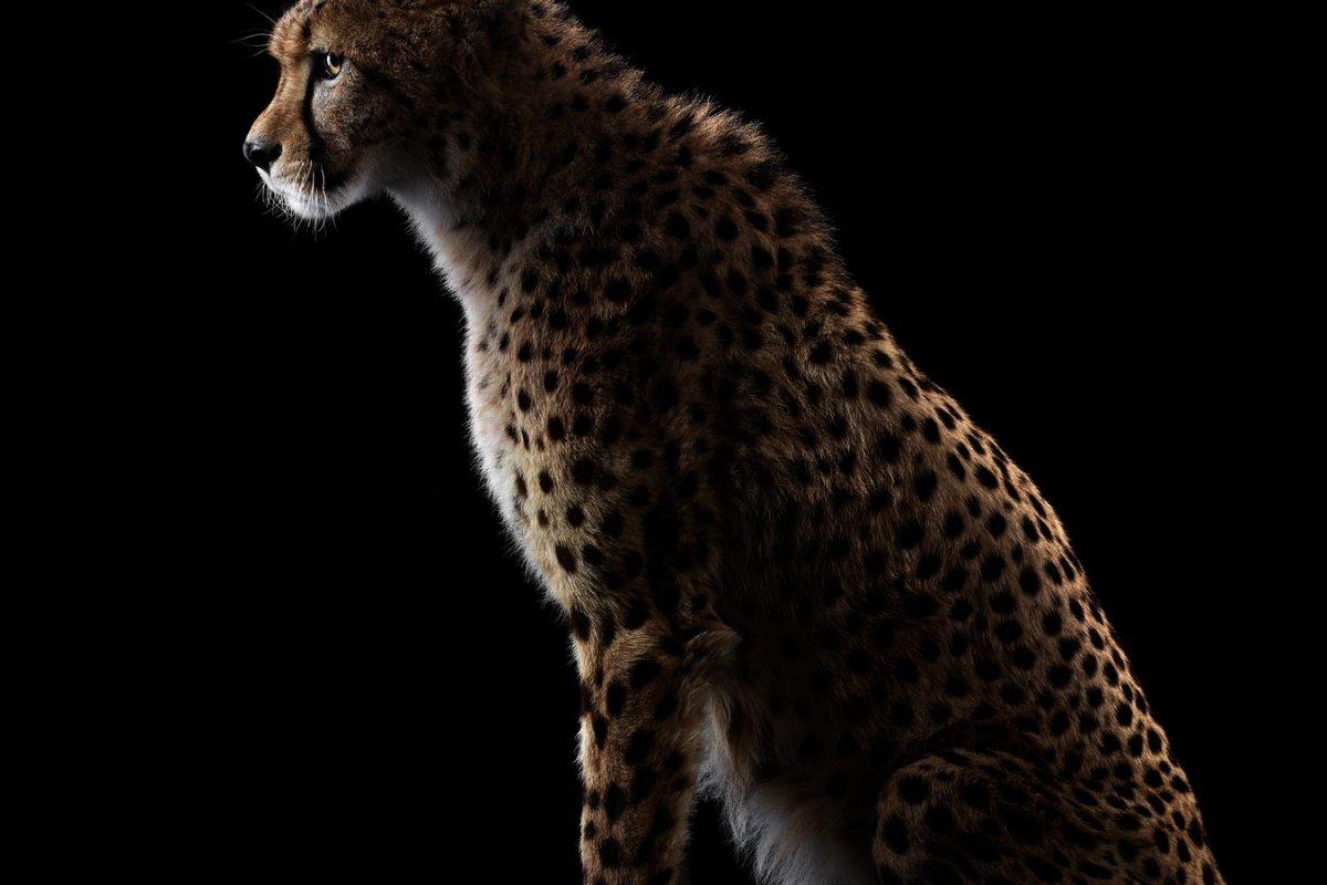 animals-brad-wilson-05
