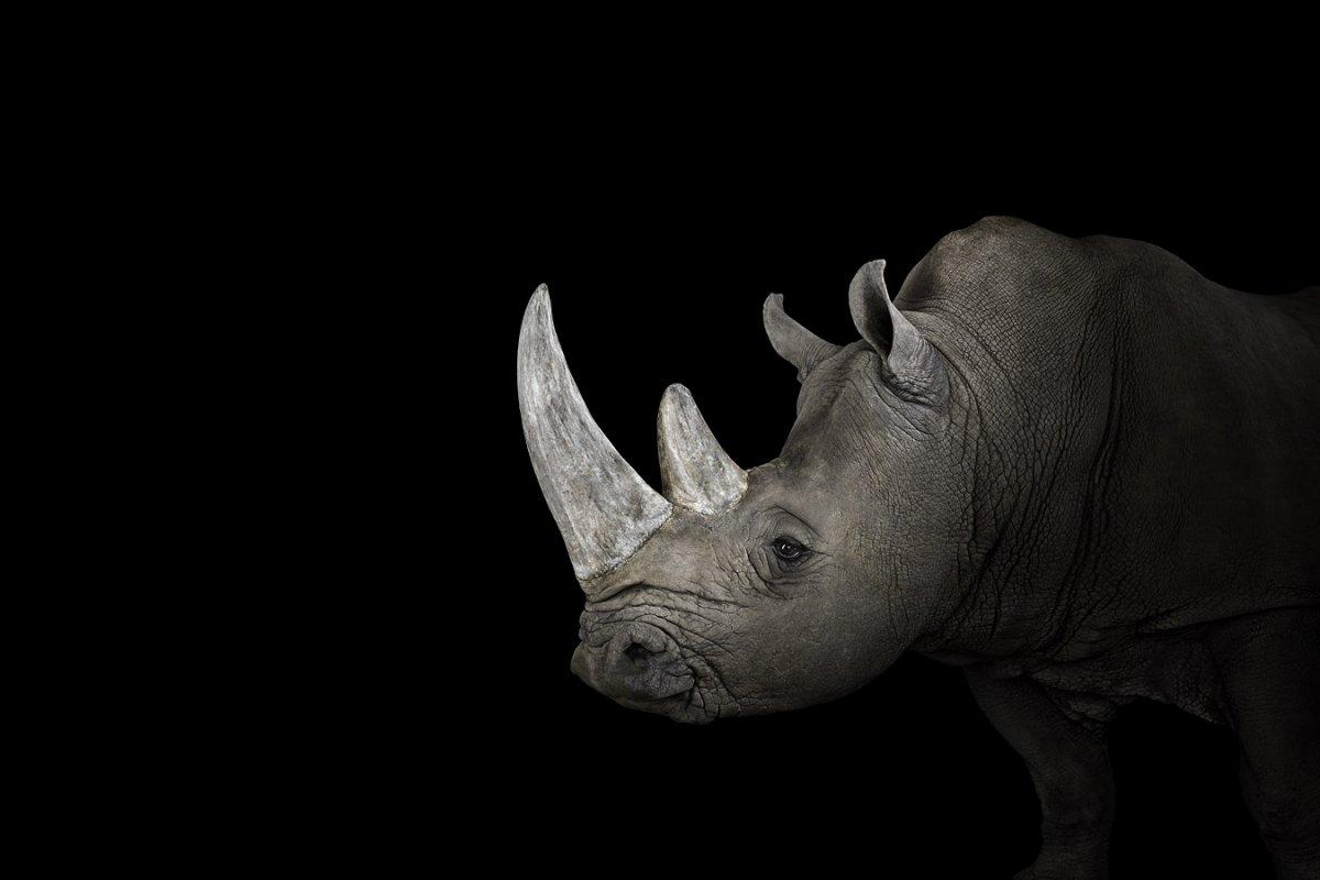 animals-brad-wilson-09