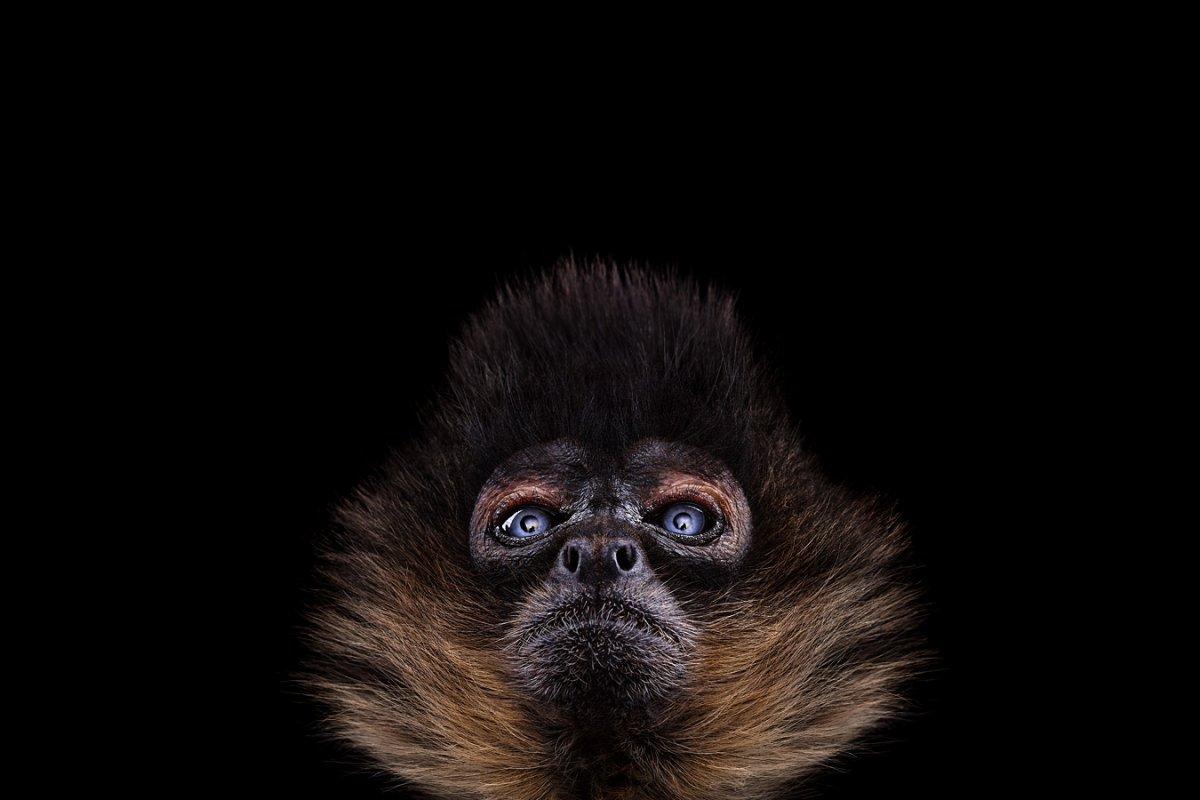 animals-brad-wilson-10