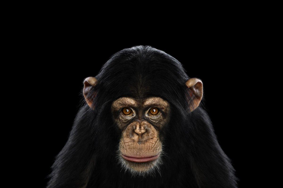 animals-brad-wilson-14