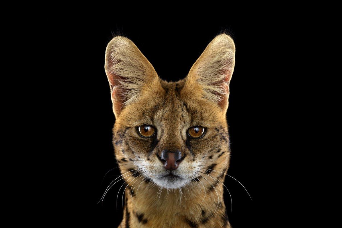 animals-brad-wilson-15