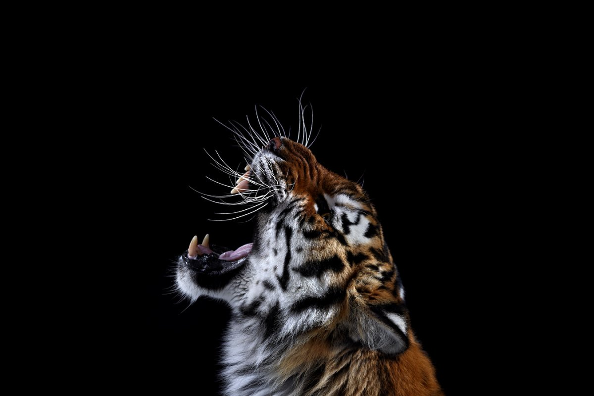 animals-brad-wilson-18
