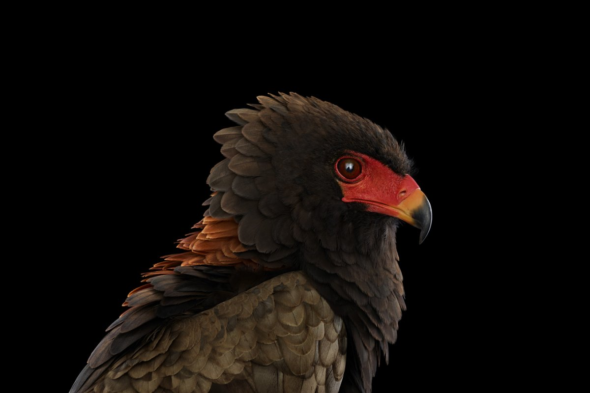 animals-brad-wilson-20