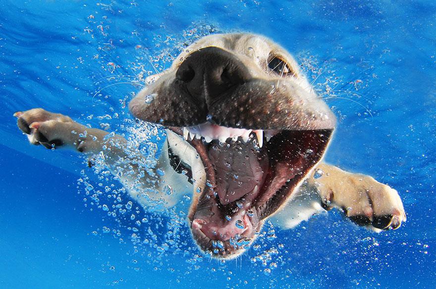 underwater-puppies-seth-casteel01